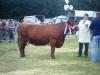 clonmelshow2010-012