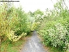 petrovska-gardens-clonmel-300613-003