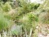 petrovska-gardens-clonmel-300613-004