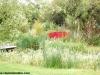petrovska-gardens-clonmel-300613-005