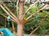 petrovska-gardens-clonmel-300613-013