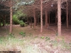 petrovska-gardens-clonmel-300613-016