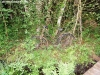 petrovska-gardens-clonmel-300613-019