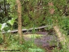 petrovska-gardens-clonmel-300613-022