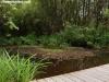 petrovska-gardens-clonmel-300613-025