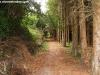 petrovska-gardens-clonmel-300613-026