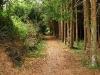 petrovska-gardens-clonmel-300613-027