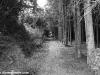 petrovska-gardens-clonmel-300613-028