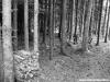 petrovska-gardens-clonmel-300613-029