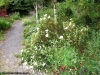 petrovska-gardens-clonmel-300613-035