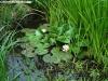 petrovska-gardens-clonmel-300613-039