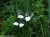 petrovska-gardens-clonmel-300613-040