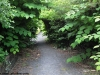 petrovska-gardens-clonmel-300613-043